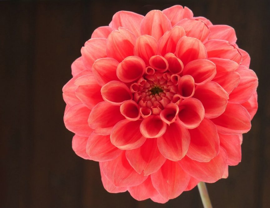 Platz 75 - Bettina Schmidt - Blütenzauber