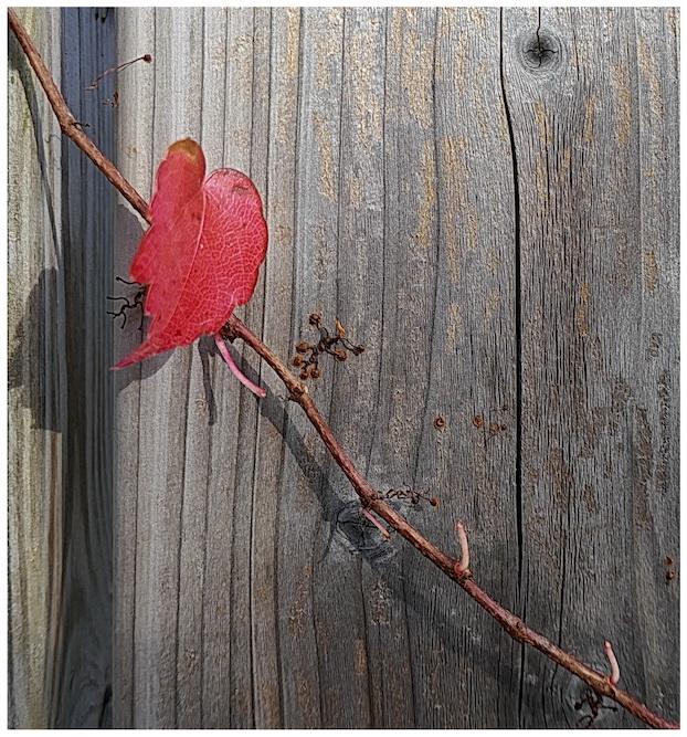 Platz 13 - Hartmut Makus - Das kleine Rote