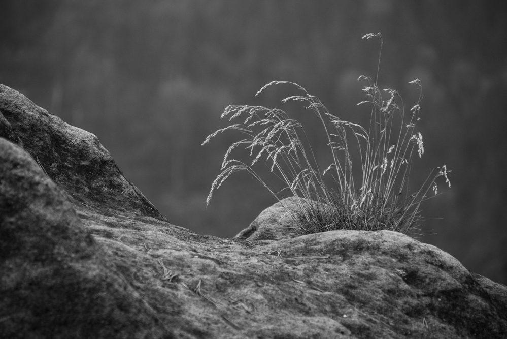 23 - Wiebke Kunas - Auf dem Stein