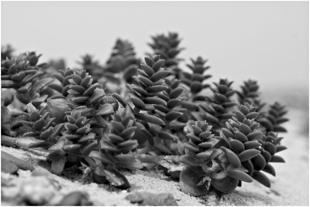 48 - Marko Reuter - Mini-Bäume