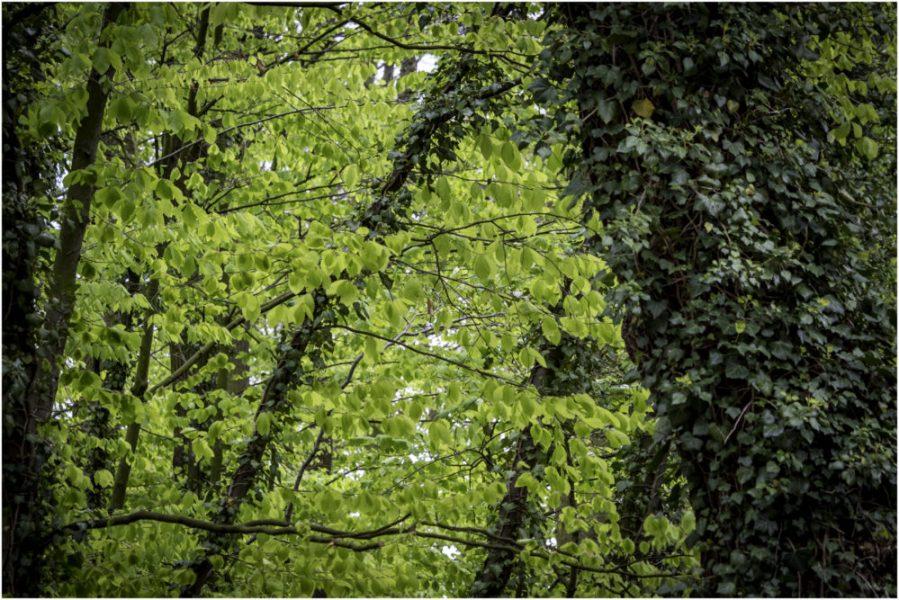 Platz 53 - Wiebke Kunas - Im Wald -