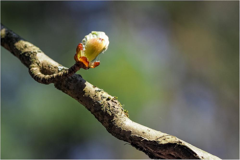 Platz 31 - Wiebke Kunas - Im Frühling
