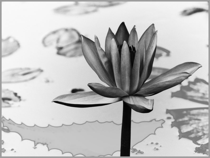 25 - Hans-Walter Schaper - Lotus