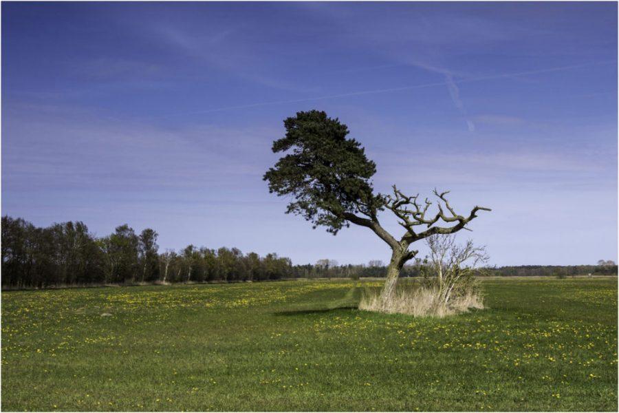 Platz 21 - Wiebke Kunas - Baum -