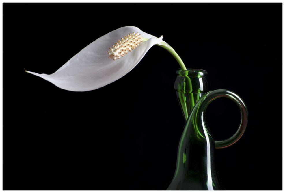 Platz 5 - Sabine Kropp - Flaschenhals mit Blüte
